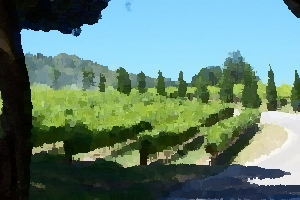 Nappa Valley Vineyard thumbnail