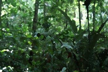 Amazon Tropical Rainforest