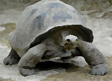Galapagos Islands Giant Turtle